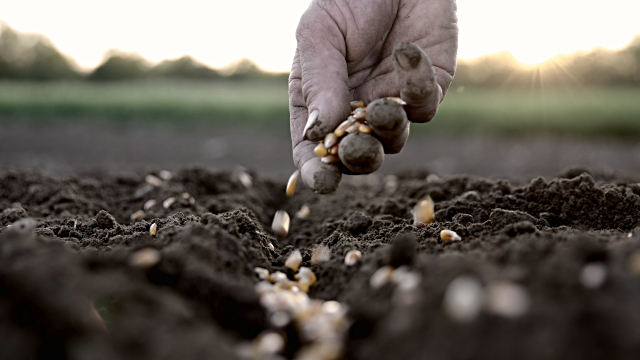 seed-sowing