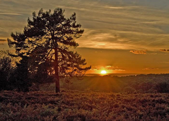 sunset-over-the-heath